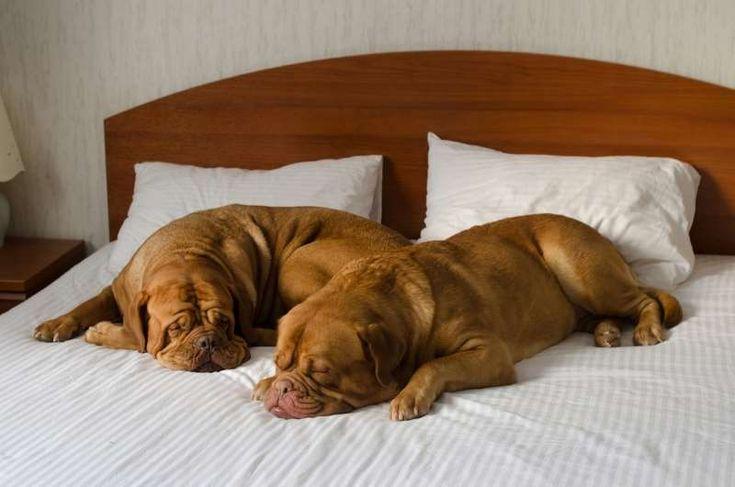 Φεύγετε για διακοπές; Τι πρέπει να γνωρίζετε πριν αφήσετε το σκύλο σας σε πανσιόν