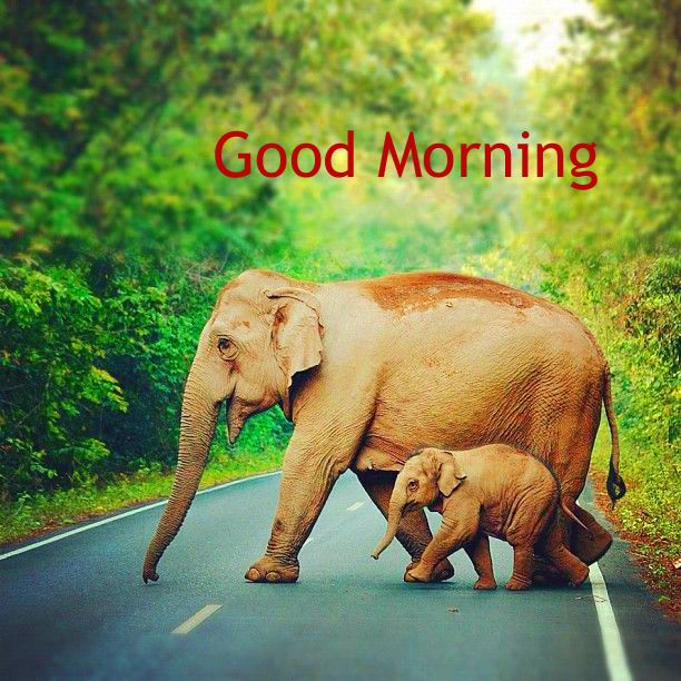 Best Nature Good Morning Good Morning Images Good Morning Cards Good Morning