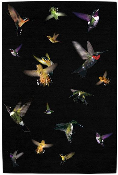 Alexander Mcqueen Hummingbird Rug