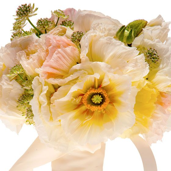 Bridget Vizoso for the Designers' Co-Op  Icelandic poppies, ranunculus, and astrantia, $260.