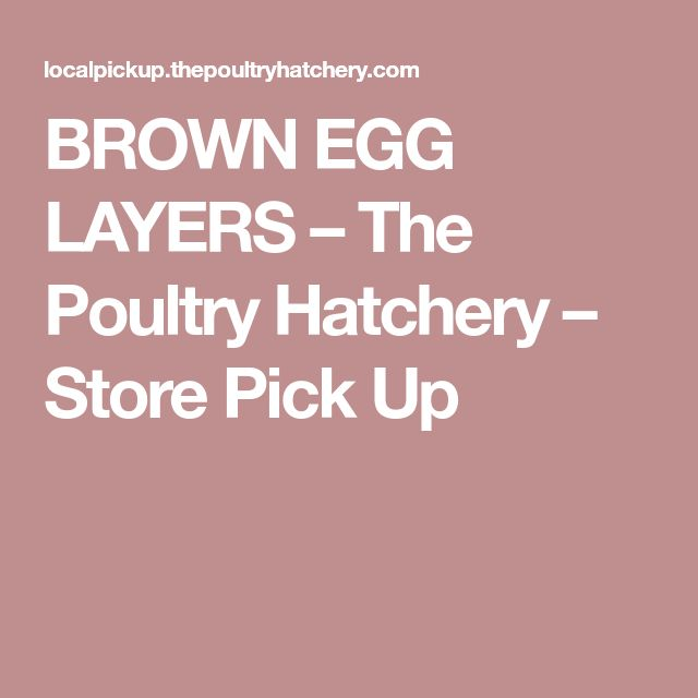BROWN EGG LAYERS – The Poultry Hatchery – Store Pick Up