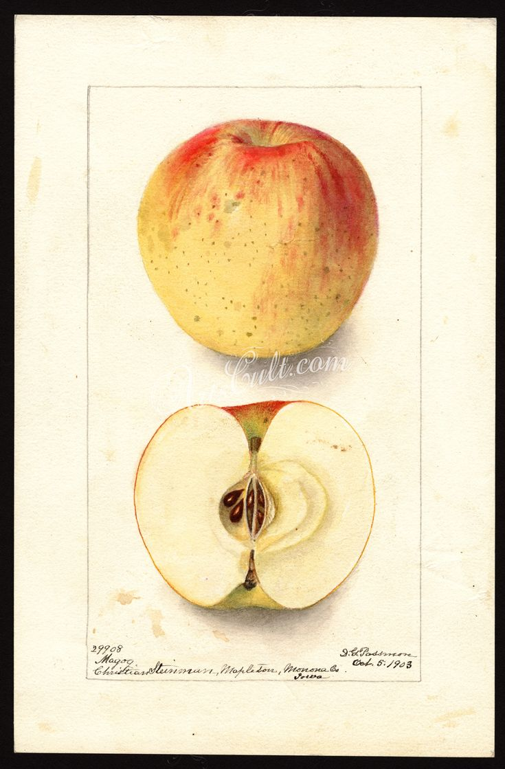 505 best 39 apple 39 images on pinterest antique books for Apple 300 picture book