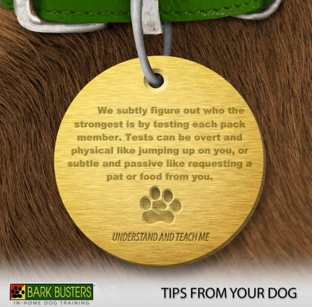 Tips from your dog...