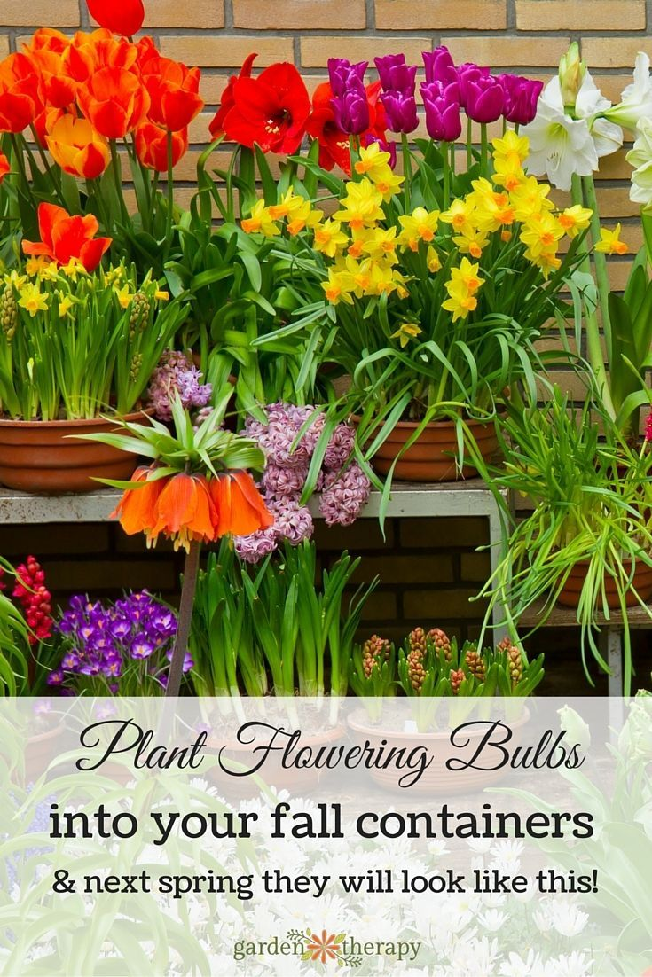 70 best Fall Planted Bulbs images on Pinterest Container garden
