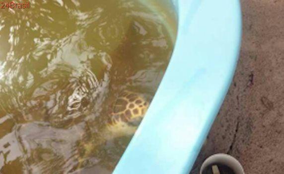 Turistas denunciam tartarugas mantidas em tanques com água escura