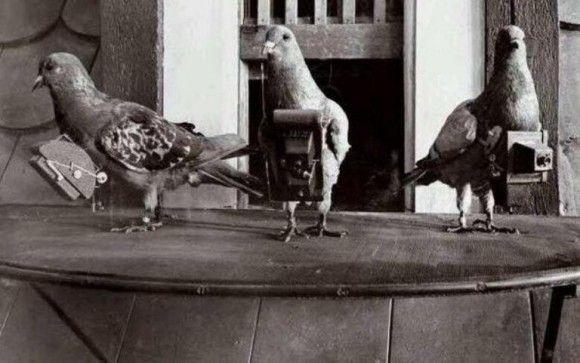 Antes de que exista Google Earth, equipaban a las palomas con cámaras.