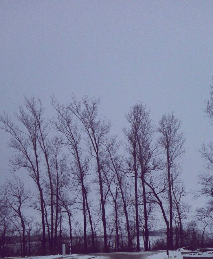 #trees #sky #grunge