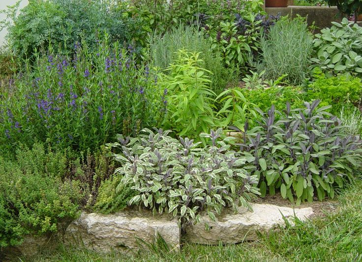 10 Best Images About Simple Herb Gardening On Pinterest