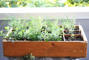 cultiver soi m me ses herbes aromatiques jardinons jardinez pinterest comment et pots. Black Bedroom Furniture Sets. Home Design Ideas