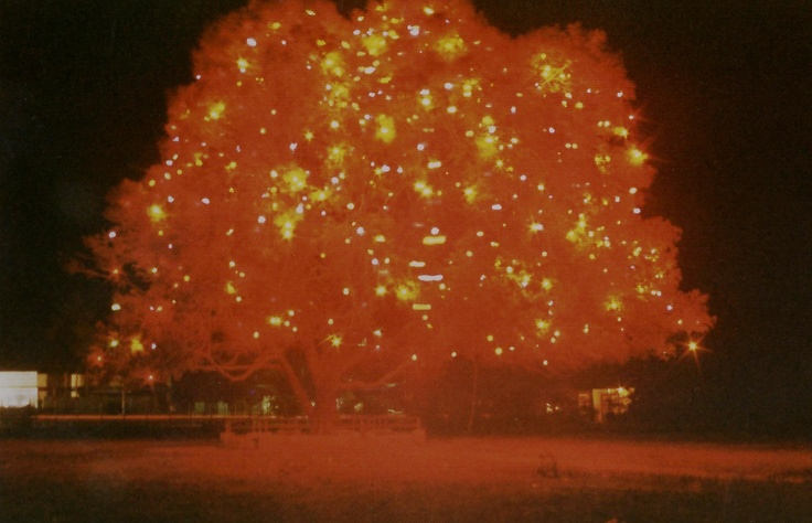 Light decorations in the tree on the Beatrixplein in Emmastad (1978)