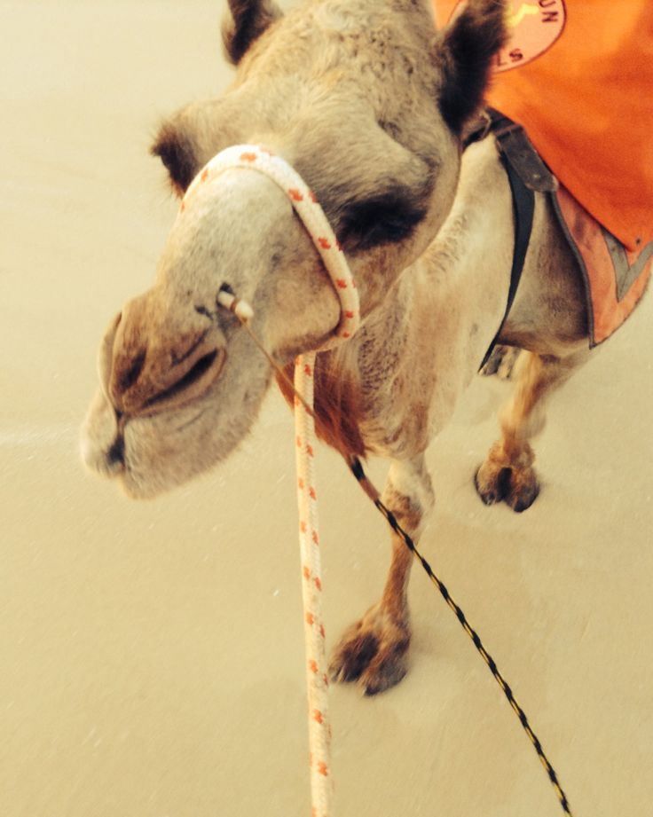 Camel ride - Broome / Cable beach