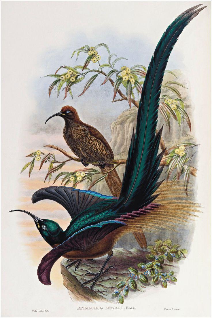 Райская птичка открытка, больному человеку выздоровление