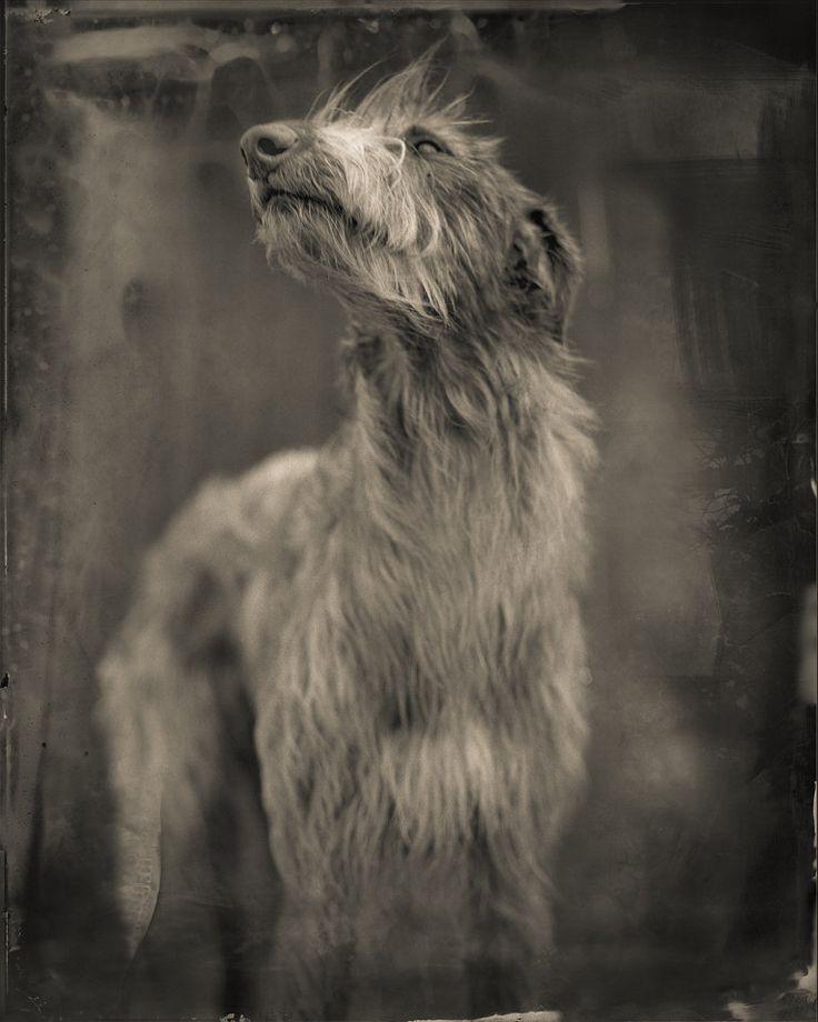 """Bog Dog"". Keith Carter    Ghostland"