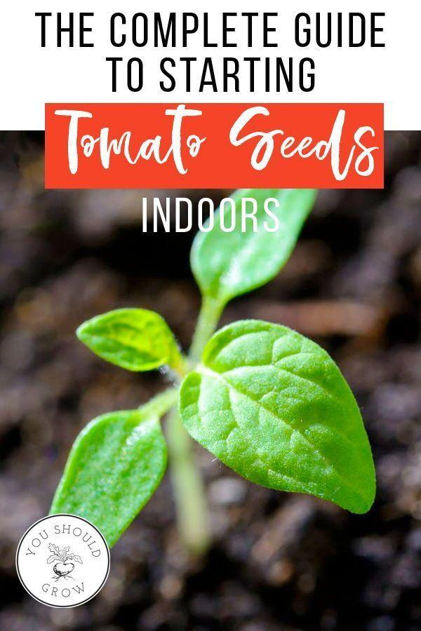 28++ When to transplant tomato seedlings ideas