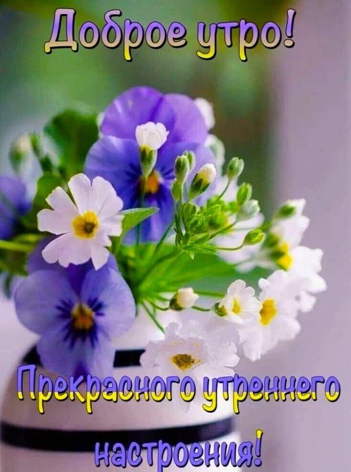 95 Odnoklassniki Utrennie Citaty Dobroe Utro Smeshnye Plakaty
