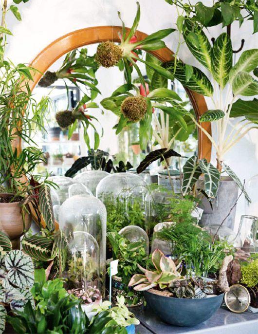 17 best ideas about botanical decor on pinterest plants for Decoration urban jungle