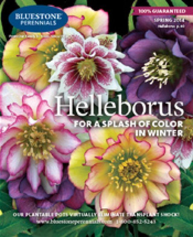 Superior Get A Free Bluestone Perennials Catalog Mailed To You