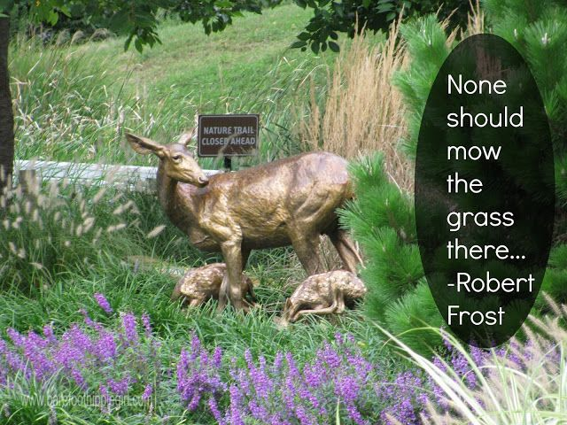 a fabulous summer poem by Robert Frost. Rose Pagonia.