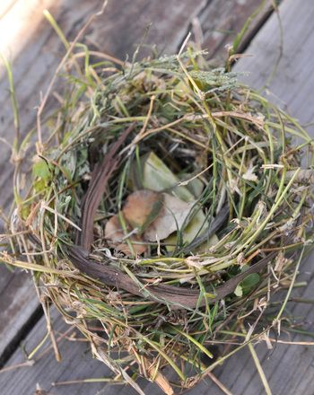 Teach the kids how a bird's nest is made by making your own nests using only natural materials!