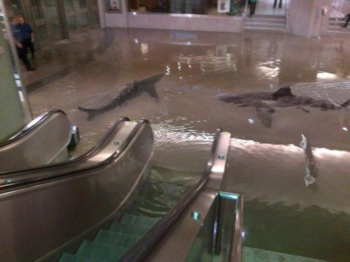 CrazyStuff, Sharks Tanks, Funny Pictures, Writing Prompts, Crazy Photos, Hurricane Sandy, Black Friday, Animal, Shops Malls