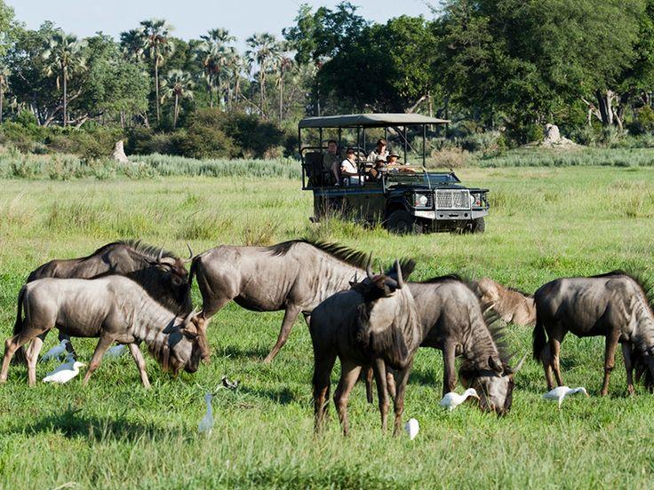 Chitabe | Signature African Safaris