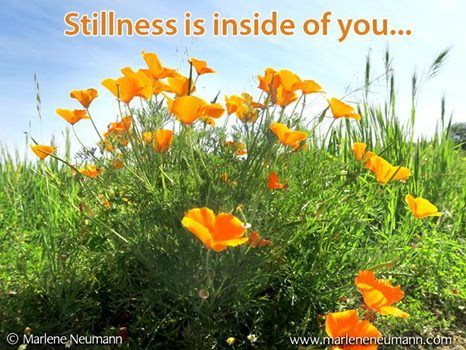 Stillness is inside of you... Inspirational quotes by Marlene Neumann. Photographer, teacher, author, philanthropist, philosopher. Marlene shares her own personal quotations from her insights, teachings and travels. Order your pack of Inspirational Cards! www.marleneneumann.com