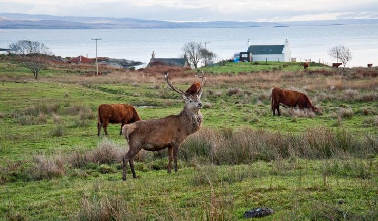 The Isle of Jura, Scotland >> Best places to travel before you have kids