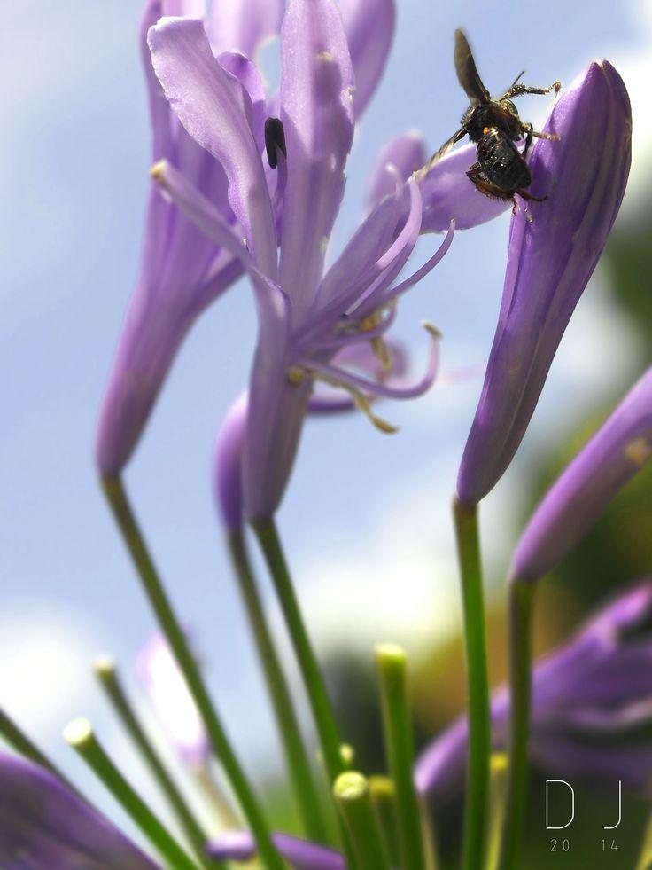 #wasp #flower #purple