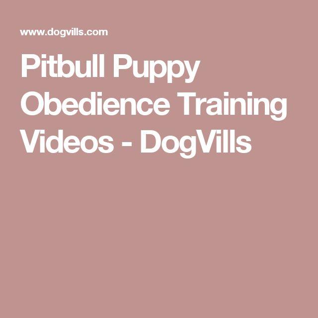 Pitbull Puppy Obedience Training Videos - DogVills