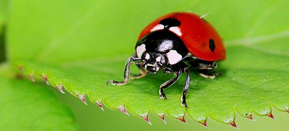 Pièges et insecticides naturel