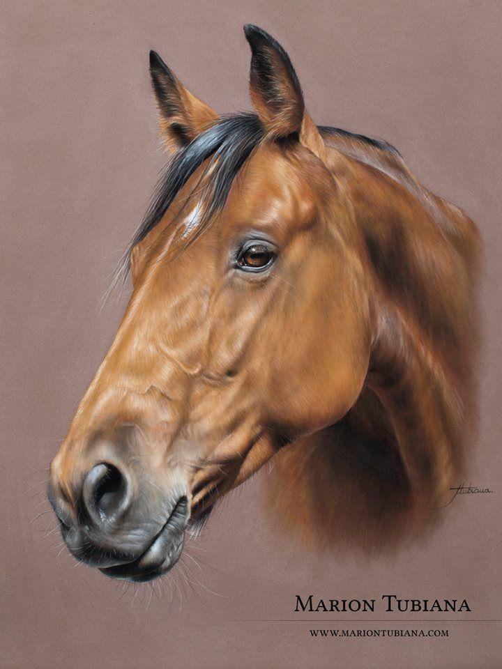 best 25  dessin cheval ideas on pinterest