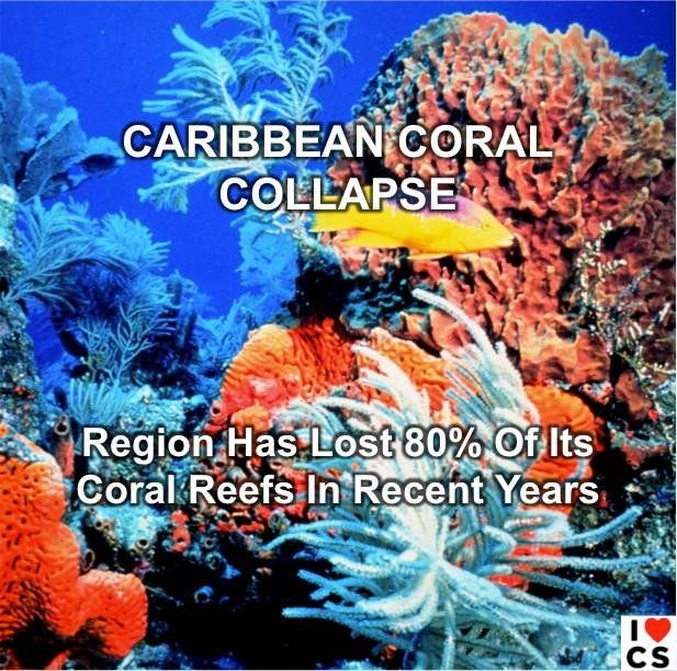 104 Best Impacts Of Ocean Acidification Images On