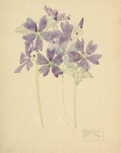 Purple Mallows, Holy Island, Charles Rennie Mackintosh. Scottish (1868 - 1926)