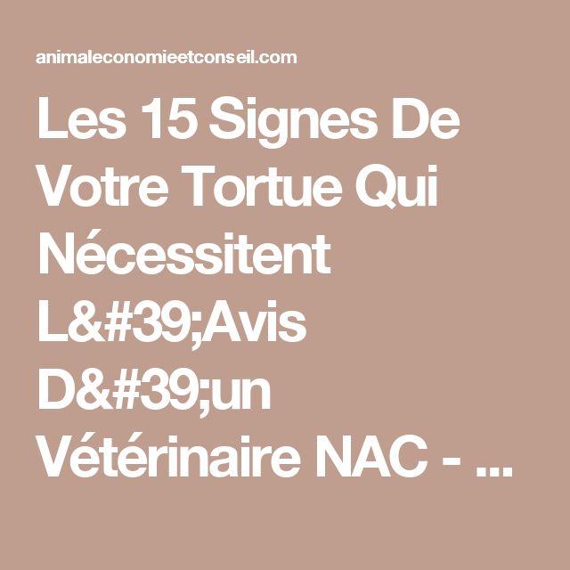 Les 15 Signes De Votre Tortue Qui Nécessitent L'Avis D'un Vétérinaire NAC - Animal Economie et Conseil
