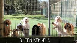 Rilten Kennels offer luxuries dog accommodation in Yarrambat, Doreen, Diamond Creek, Eltham, Whittlesea and Melbourne northern suburbs. Visit their website for more details or drop by for a visit..