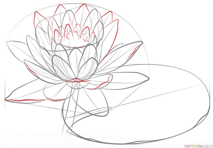 How to draw a water lily and pad | Step by step Drawing ...