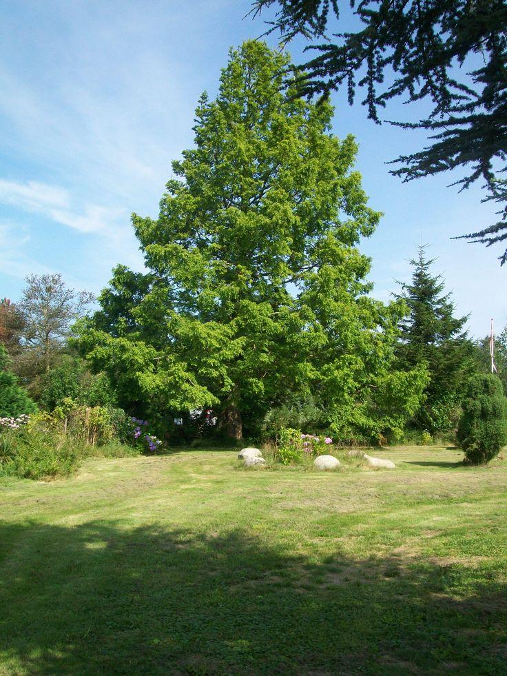 Vores smukke og store have.