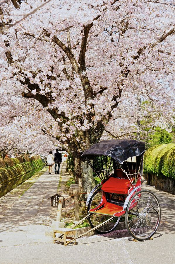 Spring Pictures - Spring Images - Spring Flowers Sakura Road, Kyoto, Japan this would be a dream come true. (Spring Cheery Blossoms Road in Japan)