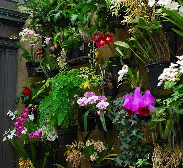 Wall of Orchids at Longwood Garden's