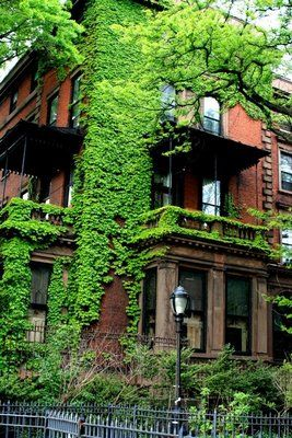 'house of vines' in Brooklyn Heights at the corner of Columbia Heights (such an exact description!)