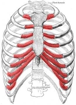 Fibromyalgia patients often show Symptoms of Costochondritis which include:  Pain in the ribcage and chest which worsens with exercise or any activity.  Pain when inhaling deeply, sneezing and coughing due to stretching of the inflamed cartilage.  Pain radiates from the chest to the arms and shoulders and, in this manner, mimics a heart attack.  Pain is often accompanied by inflammation or redness, a condition known as Tietze's Syndrome.