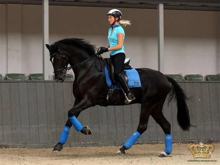 Anky Cobalt - I want my horse to look as beautiful as possible!