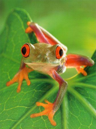 Google Image Result for http://2.bp.blogspot.com/_SSUbVSG_KVY/TNa4Bt7xDiI/AAAAAAAAARo/XN3w8HvBzyM/s1600/frog.jpg
