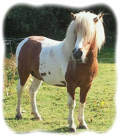 ponies for sale - Google Search