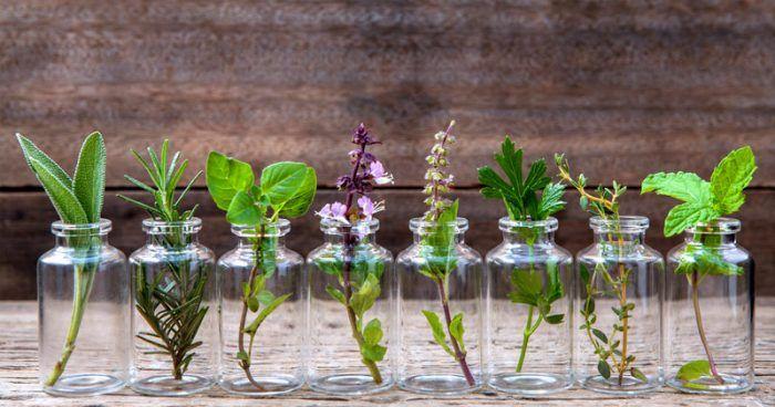 Vamos ensinar uma maneira de cultivar certas ervas na cozinha e te proporcionar um sabor agradável. O melhor de tudo isso é que você não precisa regá-las