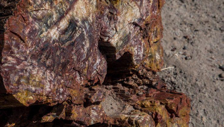 Parques nacionais: Petrified Forest - Giant Logs Trail