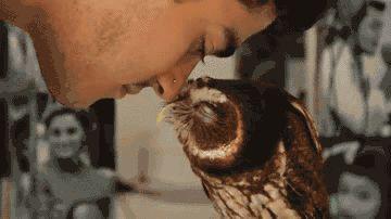 EEEEEEEEE THIS OWL AHH SO CUTE I CANNOT BREATHE