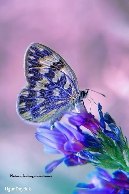 pretty purple | Butterflies | Pinterest