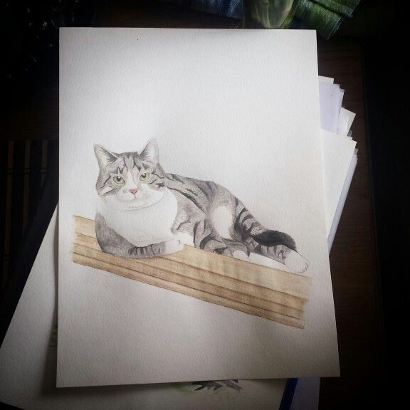 Watercolor , watercolour painting , my kitty cat by Madeleine Hoffman
