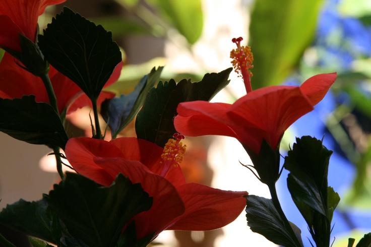 Mexico: Exotic Plants
